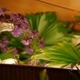 白い花瓶と紫のお花~緑の葉をバックに~