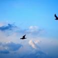 気まぐれな空と二羽の鳥